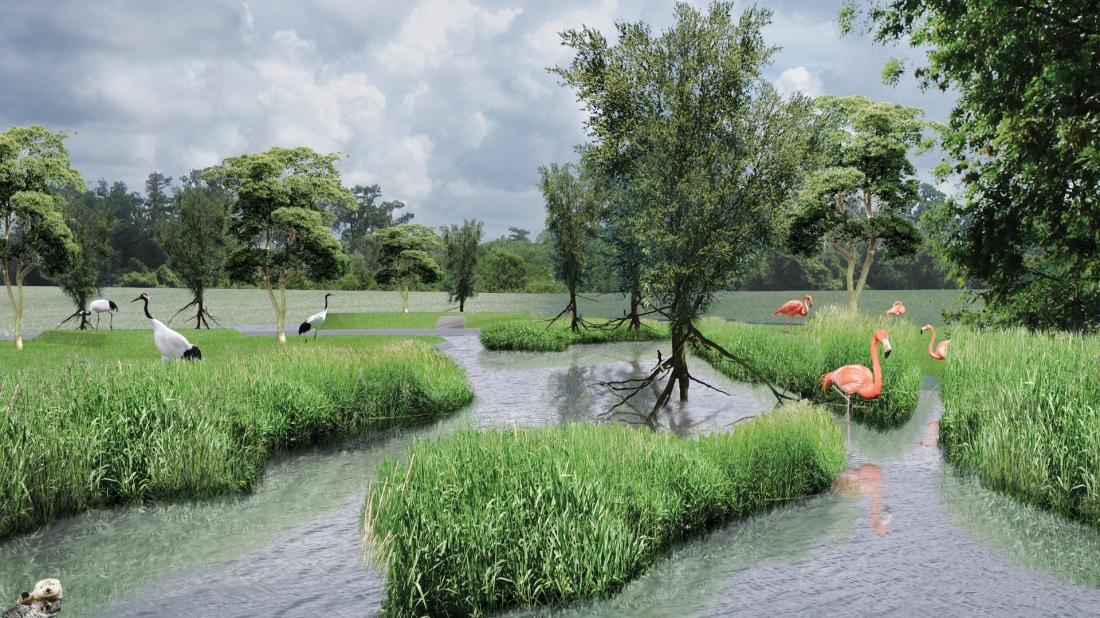 Open tropical dutch mangrove